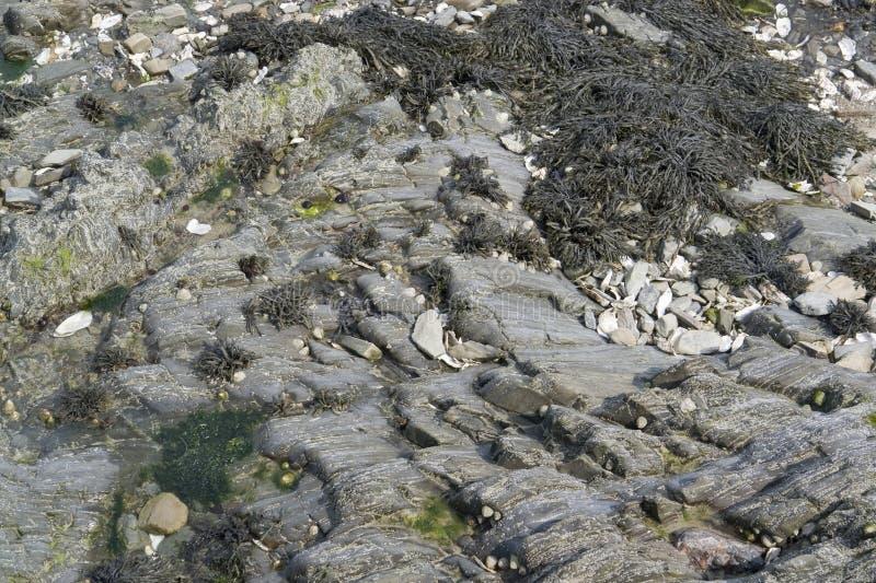 Algen und Felsformation stockfoto