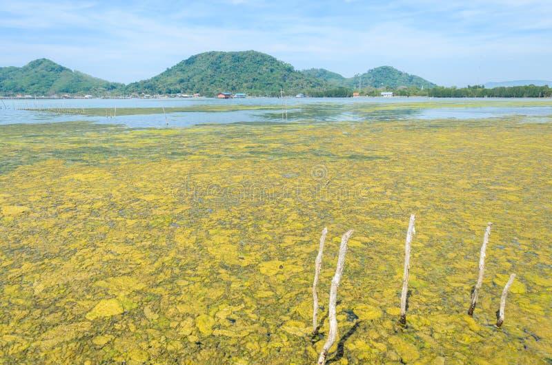 Algenachtige bloei in een tropische oceaan royalty-vrije stock foto