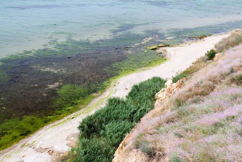 Algenzeewier op de kust dichtbij de klip Vuil Strand Mening van hierboven stock foto's