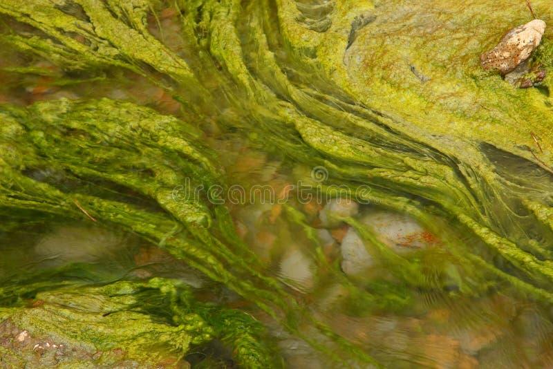 alger royaltyfri foto