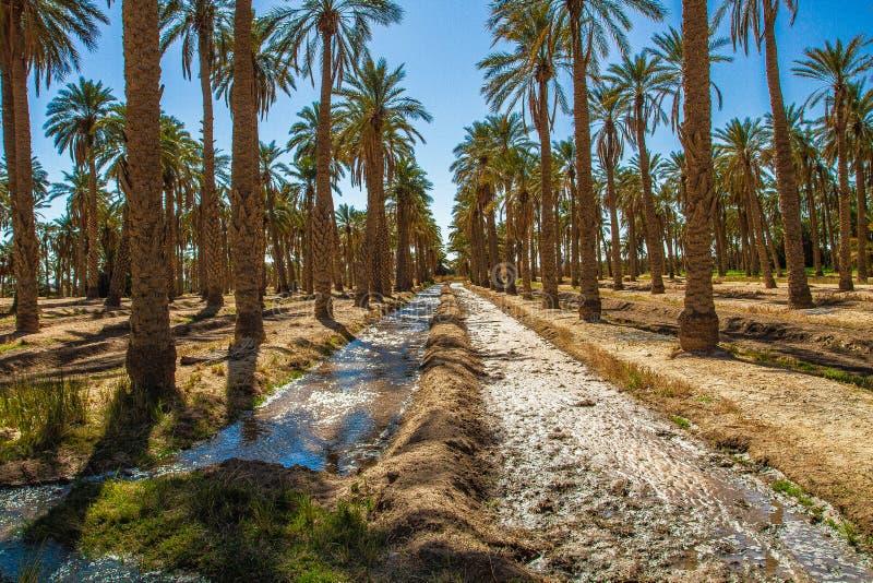 Sahara desert in Algeria. The algeria Sahara desert with dunes, plants, and camels royalty free stock photos