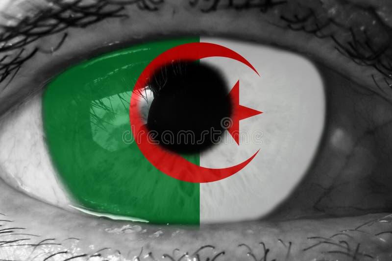 Algeriet flagga i ögat royaltyfria foton