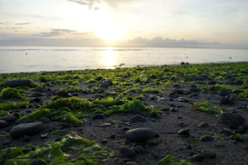 alghe immagine stock