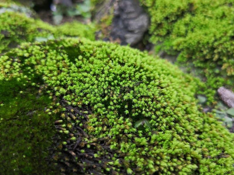 Alghe su roccia fotografia stock libera da diritti