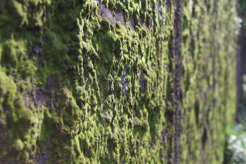 Alghe verdi immagini stock libere da diritti