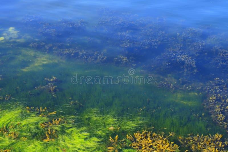 algi floor ocean zdjęcia stock