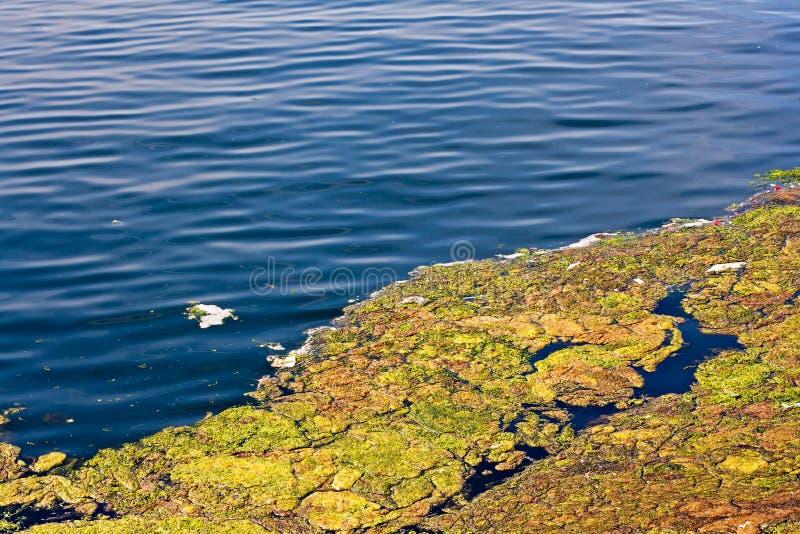 Algi na powierzchni jezioro obrazy royalty free
