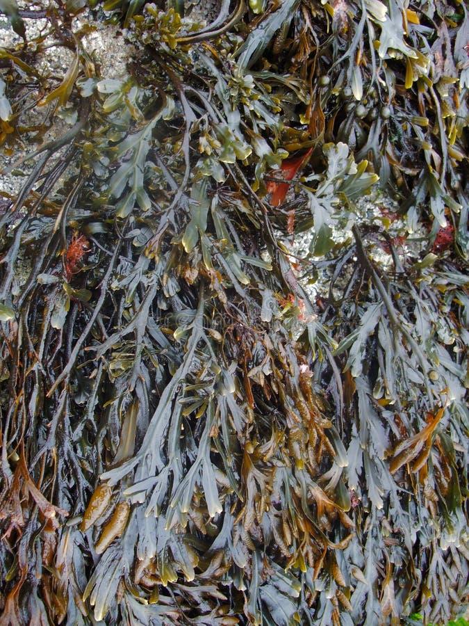 Algi roślinność obraz royalty free