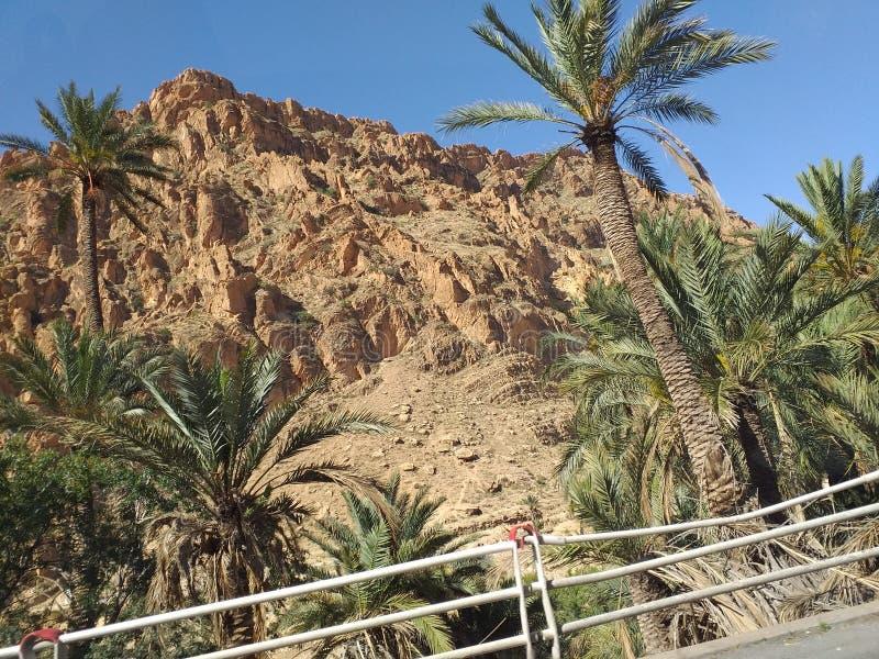 Algieria biskra obrazy royalty free