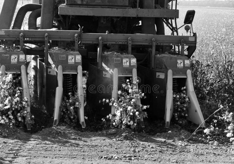 algodão das colheitas com um preto e um wight da gim de algodão foto de stock