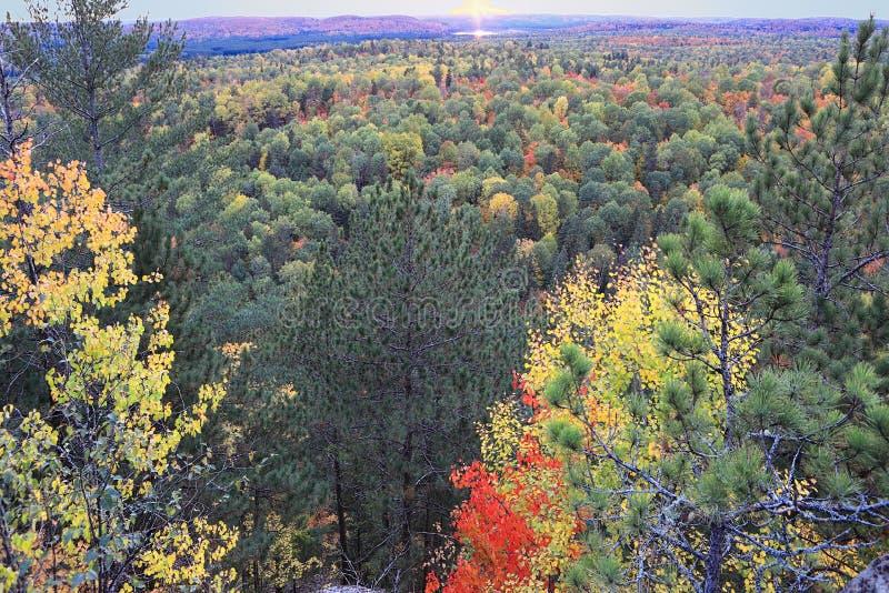 Algonquin ζωηρόχρωμα δέντρα το φθινόπωρο στοκ εικόνα