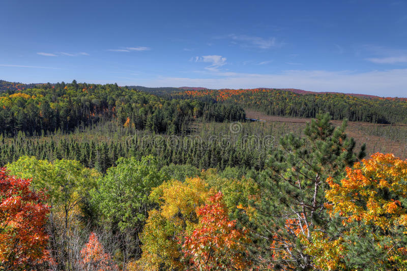 Algonquin το δάσος αγνοεί το φθινόπωρο στοκ φωτογραφίες