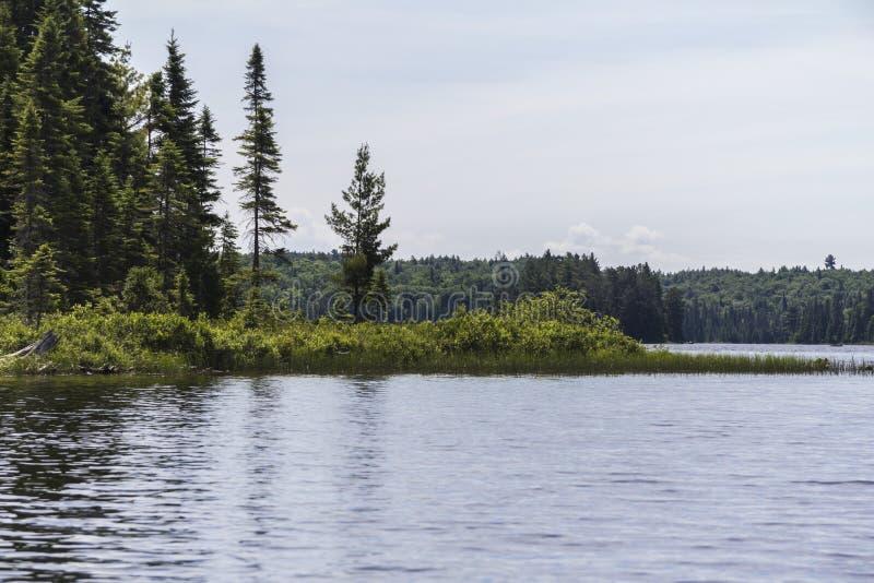 Algonquin φύση Parc στον Καναδά στοκ φωτογραφία