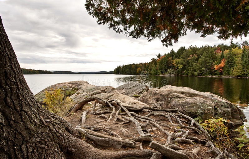 Algonquin het Meerwildernis van Parkmuskoka Ontario stock afbeelding
