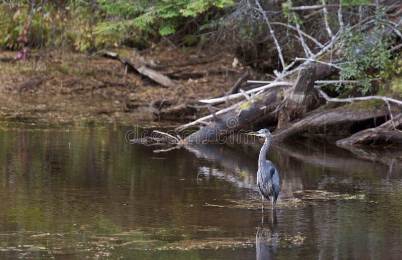 Algonquin Park Muskoka Ontario royalty-vrije stock afbeelding