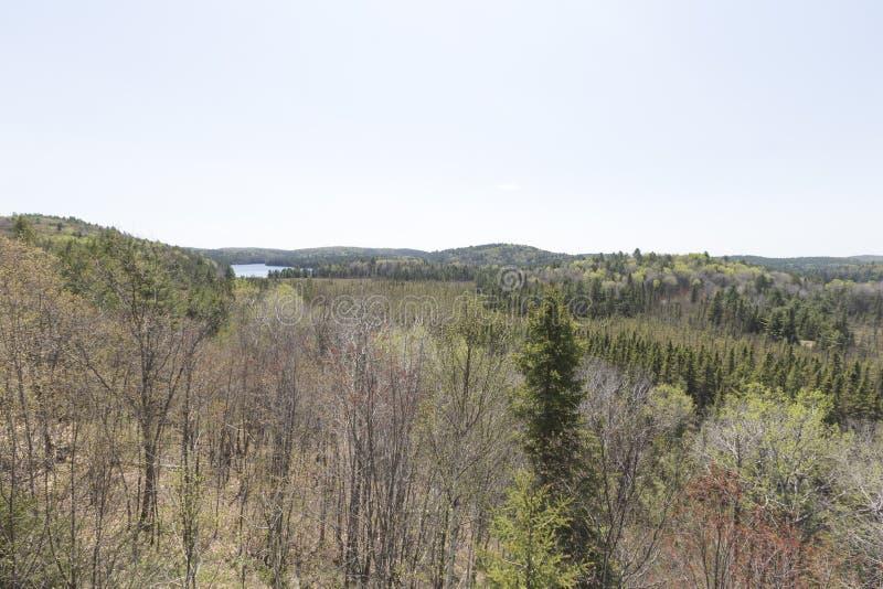 Algonquin Parkbos, Ontario - Canada royalty-vrije stock foto