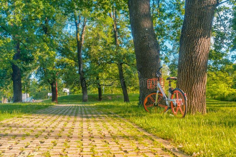 Alguém deixou uma bicicleta compartilhada no parque durante o verão ele \ 's um eco para escolher para mover-se em uma cidade imagem de stock royalty free