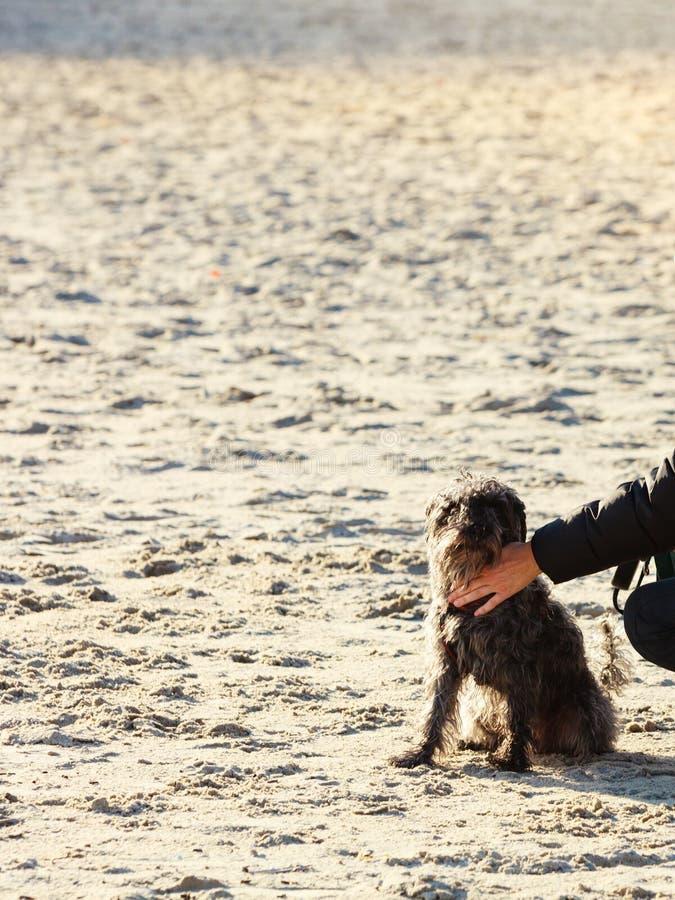Alguém entrega o cão das trocas de carícias na praia fotos de stock royalty free
