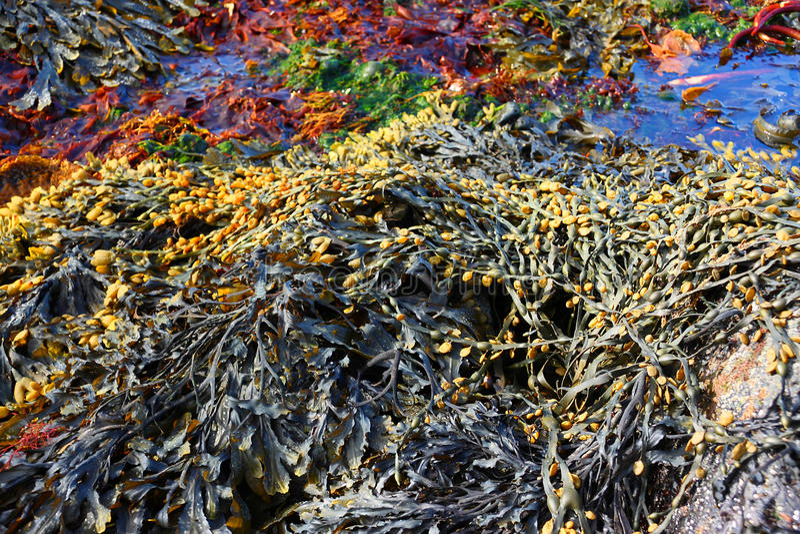 algue photo stock