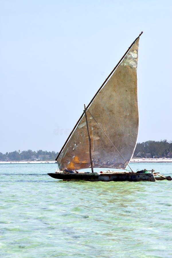 Algue de Zanzibar de plage image libre de droits