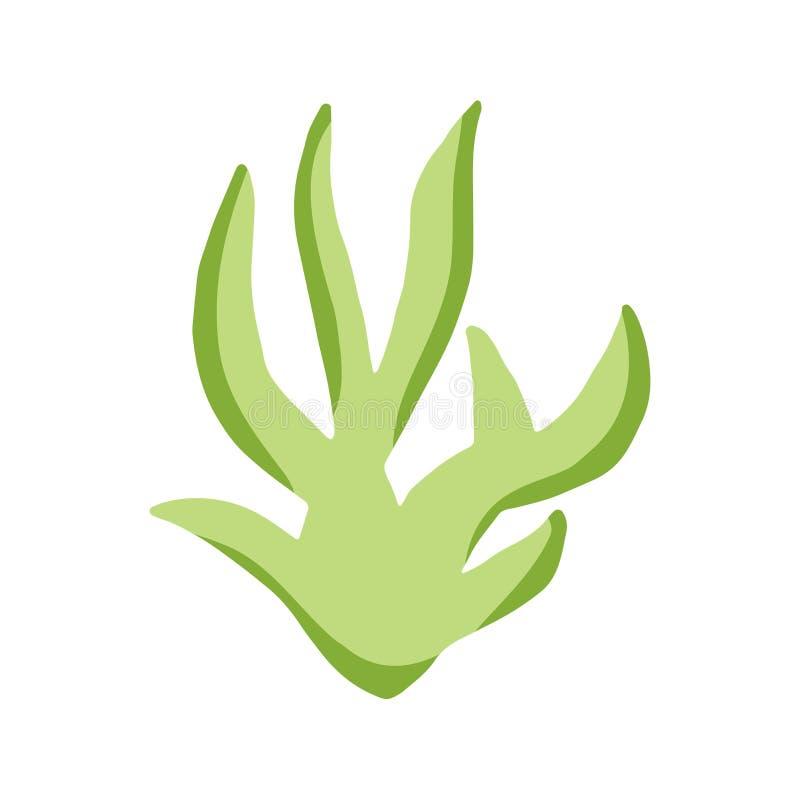 Algue en isolation usine de mer verte colorée illustration stock
