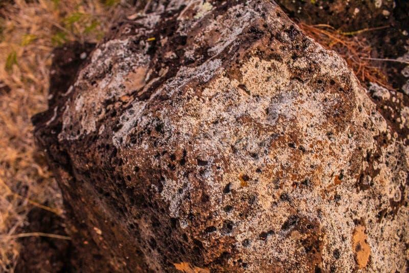 Algue seco na pedra imagens de stock royalty free