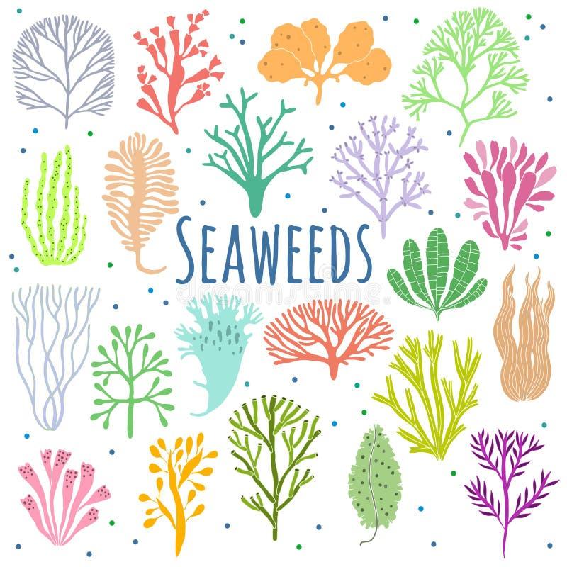 Algue tirée par la main, ensemble de corail Icônes d'usine de mer illustration de vecteur