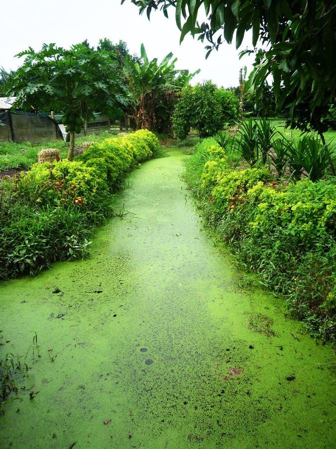 algues photographie stock libre de droits