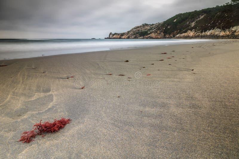 Algues sur la plage de Barayo photo libre de droits