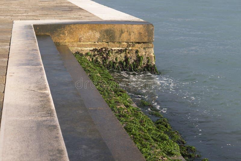 Algues sur les étapes en pierre images stock