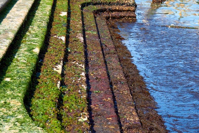 Algues sur les roches images libres de droits