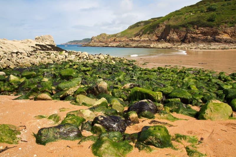 Algues sur une plage photos stock
