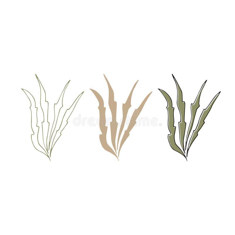 Algues tirées par la main de vecteur Différents objets d'isolement, algues illustration libre de droits