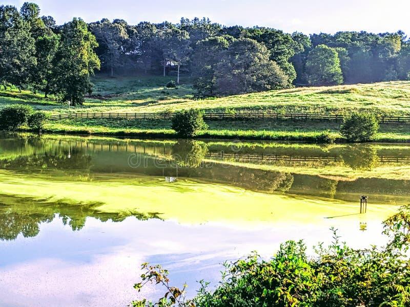 Algues vertes sur un lac photo stock