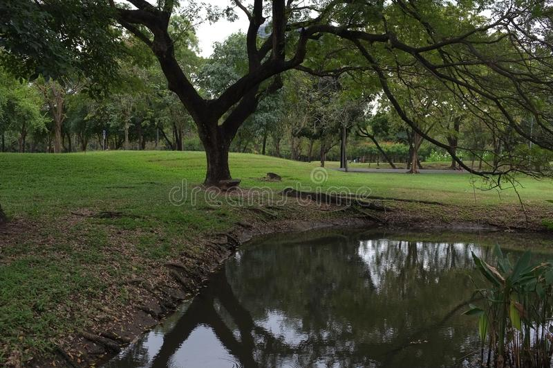 Algum canto no parque do fai da podridão imediatamente antes da chuva foto de stock