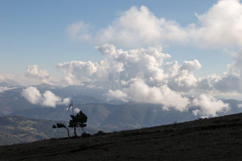 Algumas árvores pequenas e um windsock sobre uma montanha, com othe imagens de stock