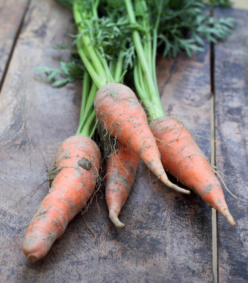 Algumas cenouras frescas com folhas imagens de stock