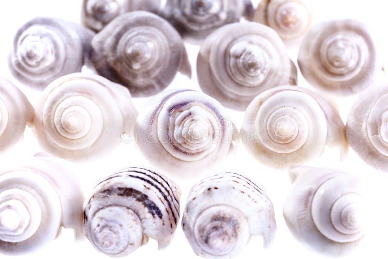 Algumas conchas do mar pequenas do caracol marinho no fundo branco imagens de stock royalty free