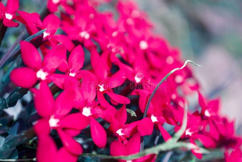 Algumas flores vermelhas bonitas nas montanhas fotos de stock royalty free