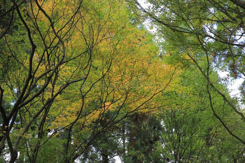 algumas folhas coloridas em Daihieihieizan imagem de stock royalty free