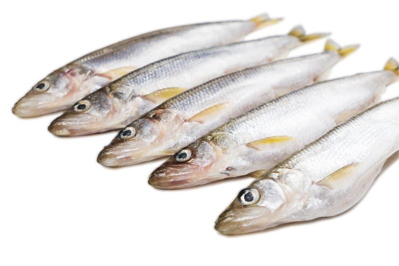 Algumas partes de peixes isolados do smelt do deliciouse no fundo branco fotos de stock