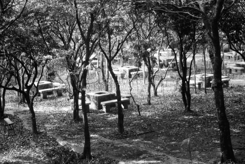 Algunas estufas y árboles de la barbacoa en el moutain foto de archivo