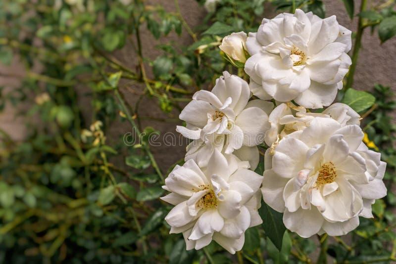 Algunas flores blancas en un parque fotografía de archivo libre de regalías