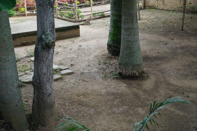 Algunos árboles en una granja colombiana foto de archivo
