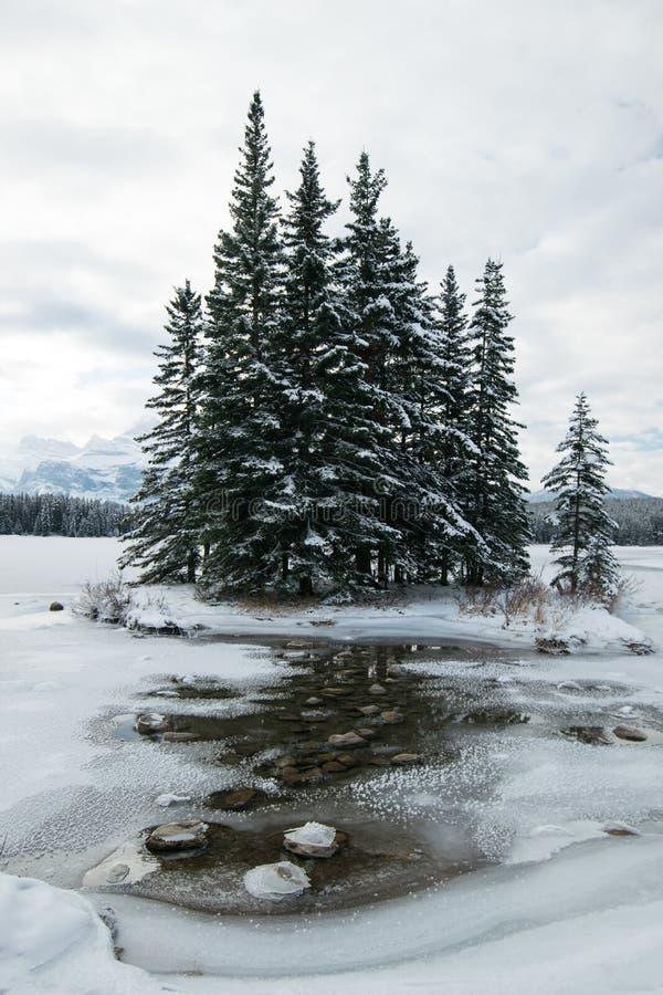 Algunos pinos solitarios adornan la costa costa de dos Jack Lake fotografía de archivo libre de regalías