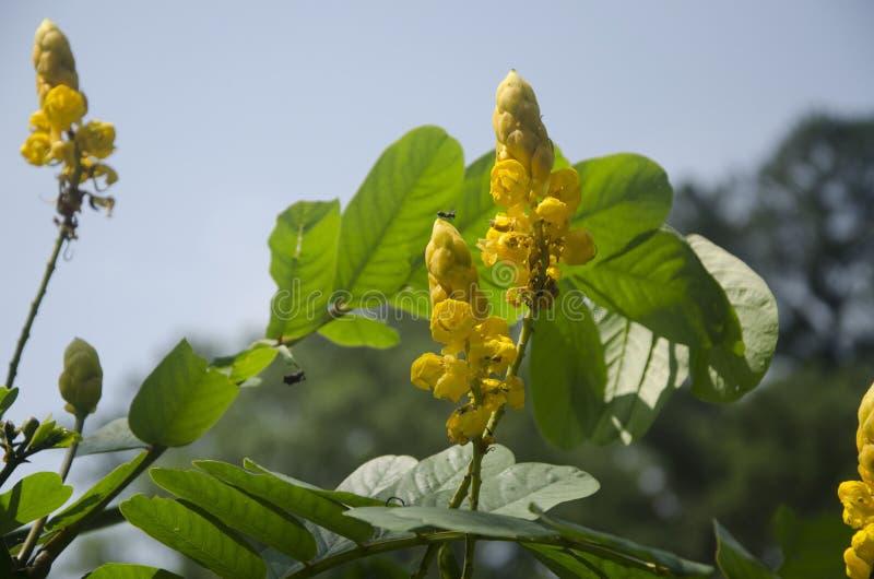 Alguns grupos de flores amarelas imagens de stock royalty free