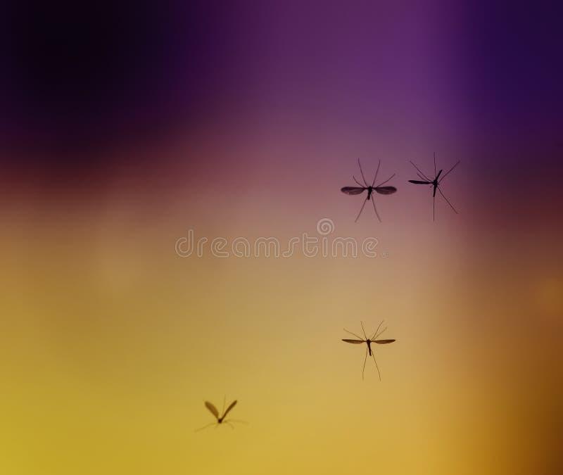Alguns mosquitos perigosos pequenos desagradáveis dos insetos voam contra imagem de stock royalty free