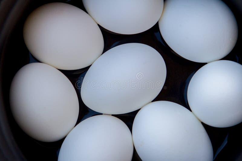 Alguns ovos cozidos em uma caçarola no sol imagens de stock