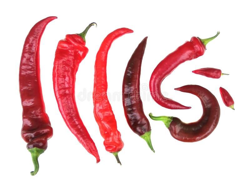 Alguns pimentões de pimenta vermelha em um estado isolado imagem de stock