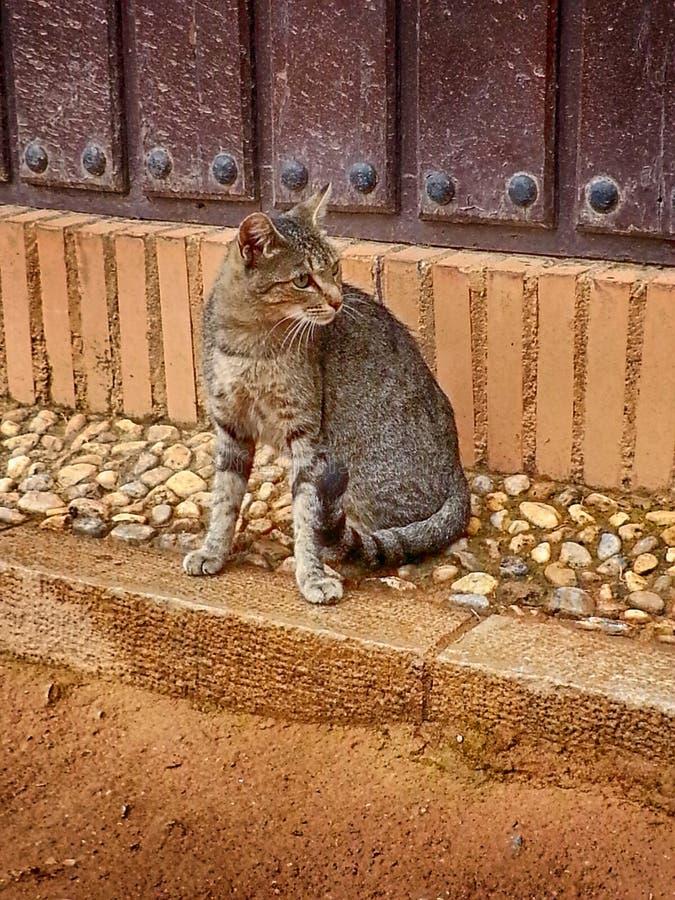 Alhambra Cat Granada Outside Nasrid Palaces Andalucia Spanje stock foto